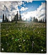Sunny Meadows  Acrylic Print