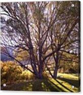 Sunny Mono Tree Acrylic Print