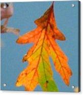 Sunny Oak Leaf Acrylic Print