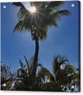 Sunny Palm Acrylic Print