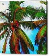 Sunny Palms Acrylic Print