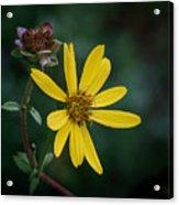 Sunny Petals Acrylic Print