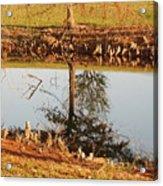 Sunny Pond Acrylic Print