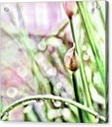 Sunny Rain Acrylic Print