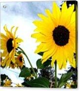 Sunny Slopes Acrylic Print