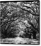 Sunny Southern Day - Black And White With Black Border Acrylic Print
