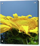 Sunny Summer Sunflowers Floral Art Baslee Troutman Acrylic Print