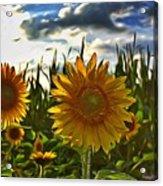 Sunny Sunflower Acrylic Print