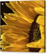 Sunny Too By Mike-hope Acrylic Print