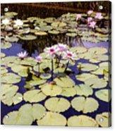 Sunny Waterlilies Acrylic Print