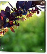 Sunrays With Blooms Acrylic Print