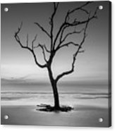 Sunrise And A Driftwood Tree In Black And White Acrylic Print