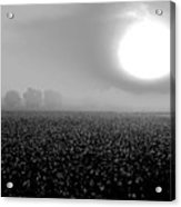 Sunrise And The Cotton Field Bw Acrylic Print