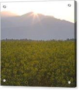 Sunrise Bursting Over The Kamnik Alps And Rapeseed Acrylic Print