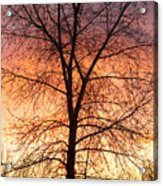 Sunrise December 16th 2010 Acrylic Print by James BO  Insogna