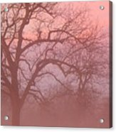 Sunrise Fog Acrylic Print
