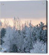 Sunrise Glos Behind Trees Frozen Trees Acrylic Print