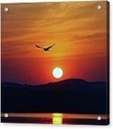 Sunrise Gull Acrylic Print
