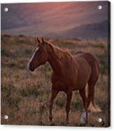 Sunrise Horse Acrylic Print