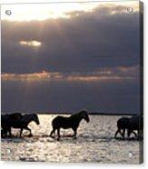 Sunrise Horses Acrylic Print
