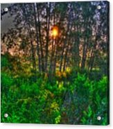 Sunrise In The Swamp-4 Acrylic Print