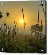 Sunrise In The Swamp Acrylic Print