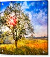 Sunrise Meadow Acrylic Print