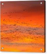 Sunrise Migration Acrylic Print