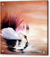 Sunrise On Swan Lake Acrylic Print