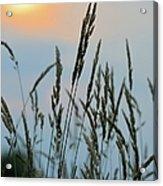 Sunrise Over Grass Acrylic Print