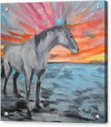 Sunrise Pony Acrylic Print