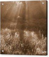Sunrise Sepia Acrylic Print