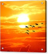 Sunrise / Sunset / Sandhill Cranes Acrylic Print