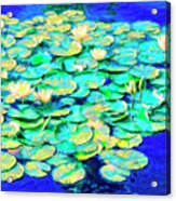 Sunrise Waterlilies Acrylic Print
