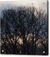 Sunrise With Bird Acrylic Print