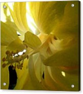 Suns Glare Acrylic Print