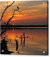 Sunset And Heron Acrylic Print