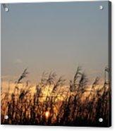 Sunset And Palm Grass Acrylic Print