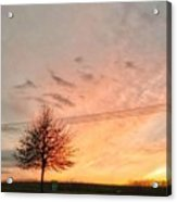 Sunset And Tree Acrylic Print