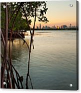 Sunset At Miami Behind Wild Mangrove Forest Acrylic Print by Matt Tilghman