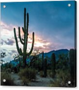 Sunset Beyond The Cacti Acrylic Print