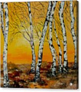 Sunset Birches Acrylic Print