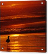 Sunset Bird 2 Acrylic Print