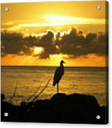 Sunset Bird Acrylic Print