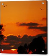 Sunset Birds Acrylic Print