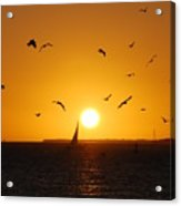Sunset Birds Key West Acrylic Print by Susanne Van Hulst