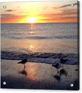Sunset Birds Acrylic Print