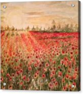 Sunset By The Poppy Fields Acrylic Print