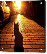 Sunset Cat Acrylic Print