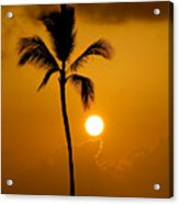 Sunset Coconut Palm Maui Hawaii Acrylic Print